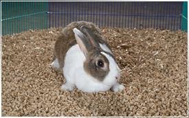 Blakeslee Animal Bedding Cleaner Drier And Safer